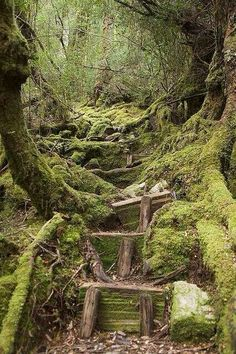 Mossy staircase in the woods