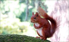 Eichhörnchen - Jahreszeiten - Galerie - Community