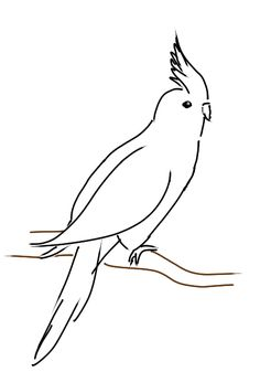 Cockatiel - sketch by Saoa on DeviantArt Animal Line Drawings, Outline Drawings, Pencil Art Drawings, Bird Drawings, Art Sketches, Nerdy Tattoos, Koi Art, Drawing Projects, Silhouette Art