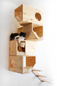 Catissa cat tree_818_001