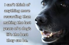Senior dogs are treasures! Provide the best possible care for our senior dogs