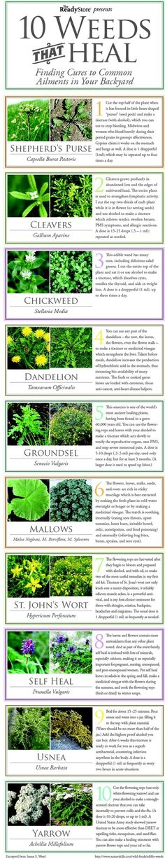 10 Weeds that HEALFinding Cures to Common Ailments in Your Backyard
