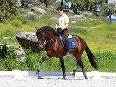 Lusitano, horseback riding in Alentejo, Portugal - Monte Velho equo resort.