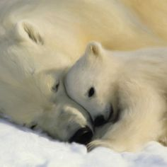 A collection of Polar Bear Pictures. Includes many pictures of the beautiful and majestic polar bear. Come here to find high quality polar bear pictures Animals Images, Animals And Pets, Baby Animals, Cute Animals, Funny Animals, Polar Bear Wallpaper, Animal Wallpaper, Wallpaper Murals, Nature Wallpaper