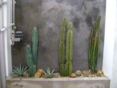 Other Environments by Arquitetura - Viva Decora - Other Environments by Arquitetura – Viva Decora You are in the right place about Cactus maceta - Landscape Design, Garden Design, Cactus House Plants, Garden Cactus, Cactus Flower, Dry Garden, Garden Tips, Desert Plants, Outdoor Plants