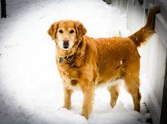 Dogs, Animals, Animales, Animaux, Doggies, Animal, Animais, Dieren, Pet Dogs