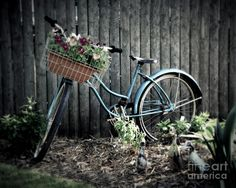 Pictures of vintage bicycles | Vintage Blue Bicycle Photograph - Vintage Blue Bicycle Fine Art Print