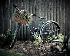 Pictures of vintage bicycles | Vintage Blue Bicycle Photograph - Vintage Blue Bicycle Fine Art Print