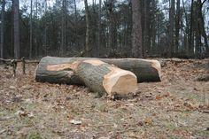 Tree bench 2013