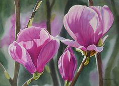 Three Magenta Magnolias by Sharon Freeman - Three Magenta Magnolias Painting - Three Magenta Magnolias Fine Art Prints and Posters for Sale
