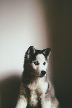 lil' dire wolf ;)