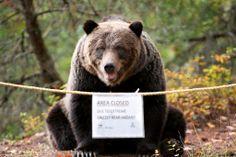 Area Closed! Due to extreme grizzly bear hazard. Photo taken at Atnarko Wildlife Platform in Bella Coola, British Columbia.