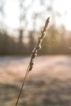 Spring Pictures, New Earth, Dandelion, Bujo, World, Plants, Photography, Blue Prints, Coaching