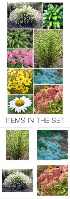 """Inside at Letti's the Final Inspections Had Begun…Outside the Landscaper Was Putting in Trees, Ornamental Grasses, Hosta & Perennials"" by maggie-johnston ❤ liked on Polyvore featuring art"