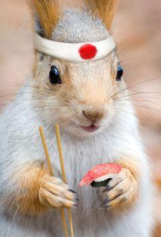 Japanese Squirrel ;p