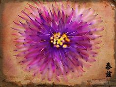 chrysanthemum on old paper