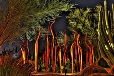 SIGHTS. Desert Botanical Garden. In Papago Park adjacent to the Phoenix Zoo, this botanic garden displays more than 20,000 desert plants from around the world, and its Plants and People of the Sonoran Desert Trail is the state's best introduction to Southwestern ethnobotany (human u