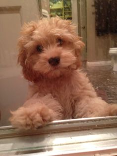 Can I take a bath too?