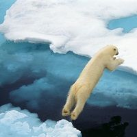 A curious polar bear on the blue pressure ridge sea ice