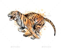 Buy Tiger Running From a Splash of Watercolor by kapona on GraphicRiver. Tiger running from a splash of watercolor, hand drawn sketch. Vector illustration of paints Tiger Sketch, Lion Sketch, Tiger Drawing, Animal Sketches, Animal Drawings, Drawings Of Tigers, Tiger Tattoo Sleeve, Running Art, Watercolor Tiger