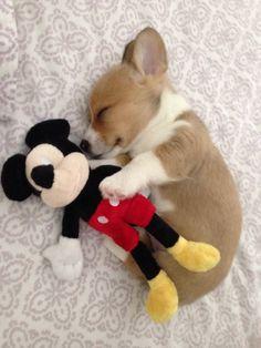 He needs his toy to sleep. http://ift.tt/2EaDRYs