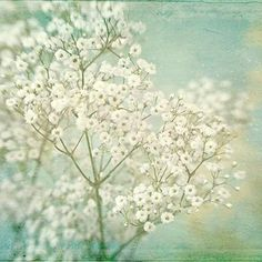 baby's breath... love the background colour with the creamy white and stronger green of the stem,,,