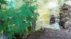 Parcul National Plitvice, o comoara naturala a Croatiei.  Vezi mai multe poze pe www.ghiduri-turistice.info Aquarium, Park, Goldfish Bowl, Aquarium Fish Tank, Aquarius, Fish Tank