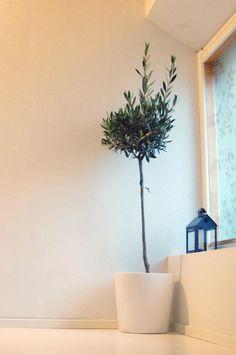 Ch. Planter Pots, Home Decor, Decoration Home, Room Decor, Home Interior Design, Home Decoration, Interior Design