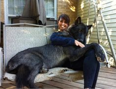 Wolf hybrid dog with her master.