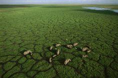 Una manada de elefantes en el lago Amboseli, Kenia