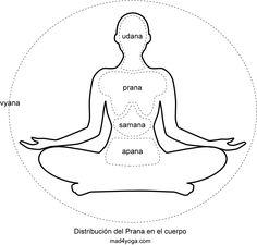 """Prana es una palabra sánscrita donde """"pra"""" significa constante y """"na"""" movimiento. Es la primera y básica unidad de energía. Es la suma de todas las energías contenidas en el universo. Por eso todos los seres vivos, en cuanto tales, están dotados de Prana que se absorbe a través, por ejemplo, de la piel, de la respiración o de la comida [...]"""