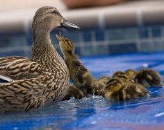 MomBabyDuck-1.png  #MothersDayNecklaceGiveaway #TurtleLoveCo