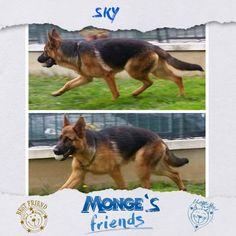 Sky #Mongesfriends