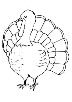 Print Coloring Image Thanksgiving SheetsTurkey PagesCool