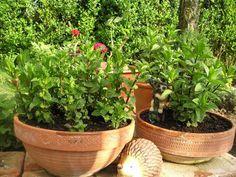Autor: MirkaG Plants, Author, Plant, Planets