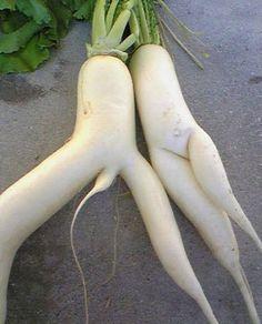 weird vegetables.
