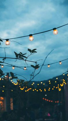 night lights. backyard.
