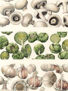 botanical illustration of veggies