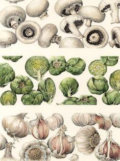 botanical illustration of veggies
