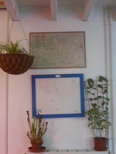 Plants and boards