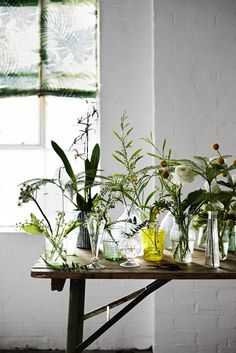 Single stems and sprigs cut from the garden and grouped en masse in an array of gleaming glass is a simple way to make an eye-catching arrangement. Photograph by Adrian Briscoe. Styling by Rose Hammick. Green Plants, Green Flowers, Cut Flowers, White Flowers, Spring Flowers, Indoor Garden, Indoor Plants, Home And Garden, Ikebana