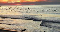 Seagulls Destin, FL