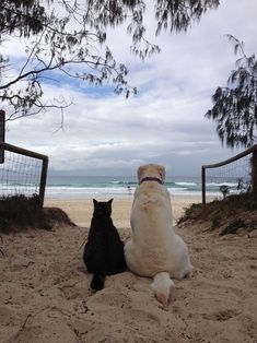 3 of  my favorite things. A dog, a cat and a beach.