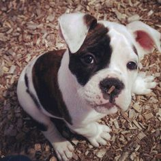 Extremely Cute Puppy - Check Our My Awesome Collection of Funniest Animals Funny Animals Pictures – Very Cute Animal Pics – Funny Cats – Funny Dogs – Cute Baby Animals - Wildlife 35 Galleries x 100 pictures each.