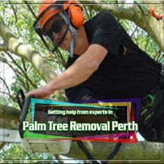 If you need palm tree removal, Perth expert suggest checking out this website- http://www.youtube.com/watch?v=UfdJ6tqs4G8&feature=youtu.be