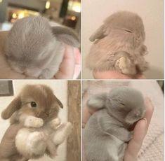 Cute Bunny, Animals And Pets, Lamb, Teddy Bear, Bunny Rabbits, Gadgets, Animals, Pets, Teddy Bears