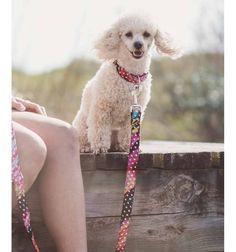 Collar para perro Brott textura Xerta