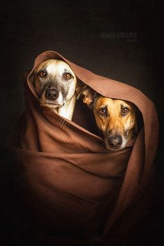 Mutts in Mufflers - Photos by Elke Vogelsang - 500px