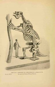 The giant sloth megatherium was a vegetarian #Geology #GeologyPage