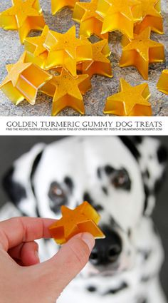 EASY + HEALTHY Naturally Golden Turmeric Gummy Star Dog Treats
